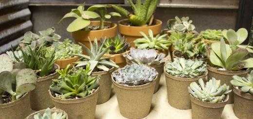 The Plant Shoppe-3
