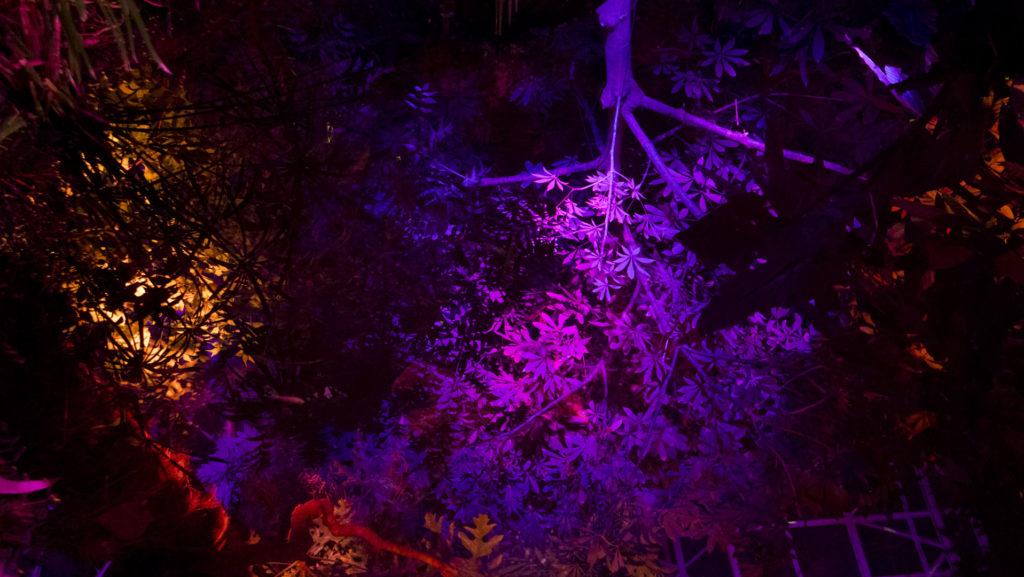 Illuminations - photo by Dennis Spielman